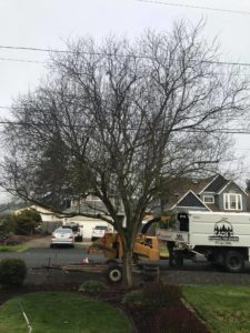 Zach's Residential Tree Services