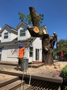 Tree Removal Newberg Oregon
