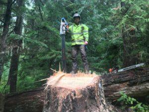 Large Tree Removal Newberg, Oregon