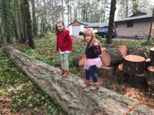 Tree Service Business Newberg, OR